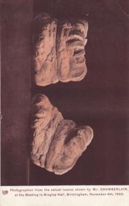 Birmingham 1903 Bakery Bread Loaves Mr Chamberlain Exhibit Antique Postcard