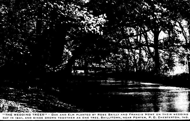 Indiana Chesterton The Wedding Trees