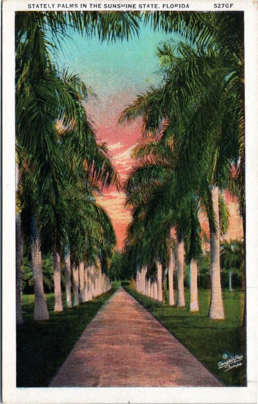 Scenic Florida postcard -Stately Palms in the Sunshine State