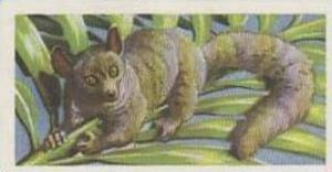 Brooke Bond Tea Vintage Trade Card African Wildlife 1962 No 8 Bushy-Tailed Ga...