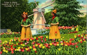 Charlotte North Carolina 1940s Postcard Tulips In Bloom Gardens of JB Ivey Girls