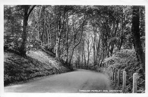 Aberdeen Through Persley Den Road Forest 1949