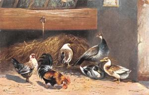 Alfred Schonian~Peacock~Ducks~Hen & Rooster in Barn~Artist~Ernest Nister~1907 PC