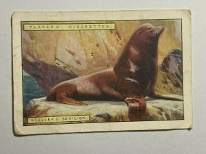 CIGARETTE CARD - PLAYERS NATURAL HISTORY #11 STELLAR SEA LION  (UU477)