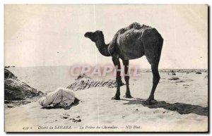 Old Postcard Morocco Sahara Desert The Prayer of Camel Camel Camel Driver