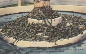 ST AUGUSTINE, Florida, 30-40s; Baby Alligator's at Casper's Gator Jungle