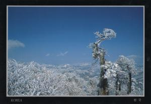 Korea - Winter landscape of Taebaek mountain