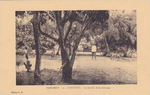 Le Jardin De La Douane, Cotonou, Dahomey, Africa, 1900-1910s