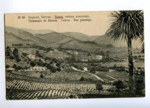 171174 Adjara Georgia BATUMI CHAKVA Tea garden Vintage PC