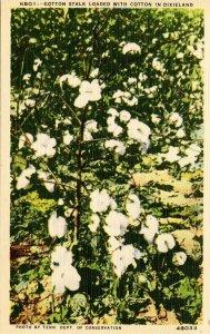 Cotton Stalk in Dixieland