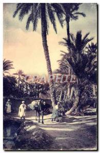 Modern Postcard Biskra A Path in the Palmeraie Camel