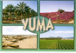 Yuma Arizona Valley Crops Colorado Valley Vegetable Farming  Postcard  # 8214