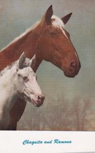 Horse Portrait , 40-60s ; Chaquita & Ramona