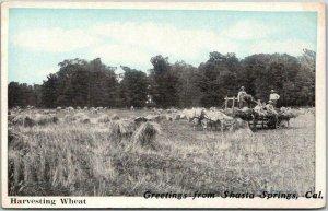 Vintage 1920s SHASTA SPRINGS, California Greetings Postcard Harvesting Wheat