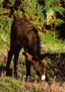 Animal Postcard, Young Donkey in the New Forest Hampshire GO2