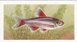 Mitchum Foods Vintage Trade Card Aquarium Fish 1957 2nd Series No 36 Bloodfin