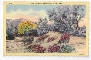 Palo Verde Smoke Trees California Desert 1941 Curteich Linen