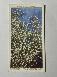 CIGARETTE CARD - WILLS GARDEN FLOWERS #23 GYPSOPHILA    (UU02)