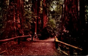 California Santa Cruz Pathway Through Big Trees Park