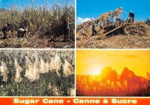 Mauritius Ile Maurice Sugar Cane Sunset Canne a Sucre