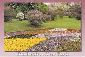 Highland Park NY, Rochester, New York - Lilac Festival and Pansies