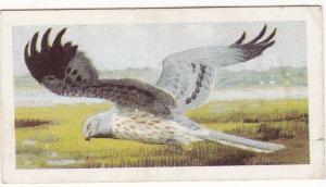 Trade Card Brooke Bond Tea Wild Birds in Britain 31 Montagu's Harrier