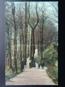 Dorset SHAFTESBURY The Pine Walk c1907 Postcard by R. Wilkinson & Co.