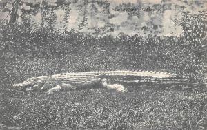 Singapore Old Vintage Antique Post Card Crocodile Unused