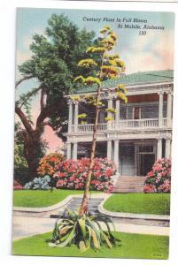 Century Plant Agave Mobile Alabama AL Vintage Linen Postcard