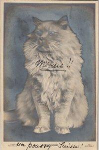 RP; Portrait of Emporer the cat, 1900-10s
