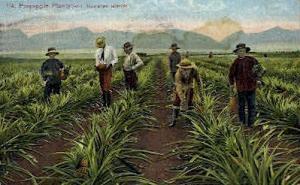 #114 Pineapple Plantation Hawaiian Islands HI Writing On Back