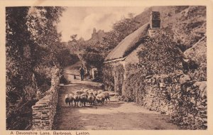 LYNTON, England, 1900-1910s; A Devonshire Lane, Barbrook, Sheep