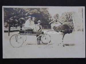 Ostrich Drawn Carriage / Cart - showing three chidren - Old RP Postcard
