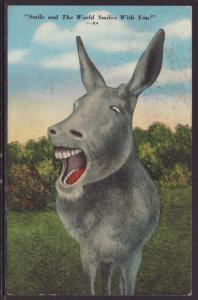 Donkey,Comic Postcard