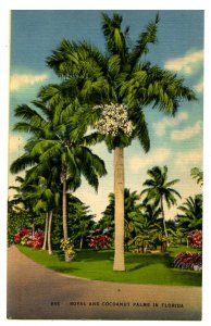 FL - Royal and Cocoanut Palms