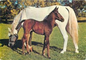 Horse and foal Kruger publishing postcard