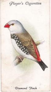 Cigarette Cards Player's Aviary and Cage Birds No 49 Diamond Finch