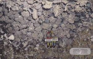Tennesse Chattanooga Lookout Mountain Diamond Corridor Fairyland Caverns Rock...