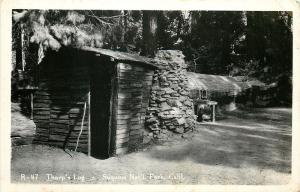 Three Rivers California~Tharp's Log House~Hollowed Out Sequoia Tree~1940s RPPC