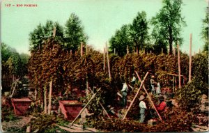 Vtg Postcard 1920s Hop Picking California - Ed Mitchell Pub - Unused