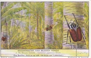 Liebig S1644 Large Insects Of The Belgian Congo No 2 Goliath Beetle