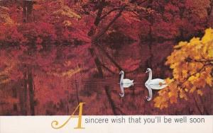 Birds White Swans A Sincere Wish That You'll Be Well Soon