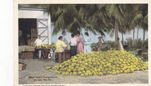 PUERTO RICO, 1900-1910'S; Packing Grape Fruit