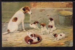 Thoroughbreds Dogs BIN