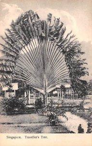 Traveller's Tree Unused