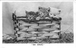 Cute Kittens ~ So Snug ~ Cat Cats Basket Black and White RPPC Postcard