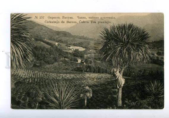 170474 Adjara Georgia BATUMI Chakva TEA garden Vintage PC