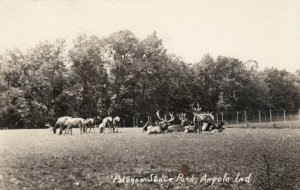 RP, ANGOLA , Indiana, 1936 ; Elk in Pokagon State Park