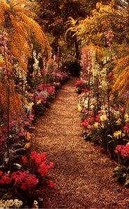 Pennsylvania Kennett Square Longwood Gardens Flower Bordered Walk 1967