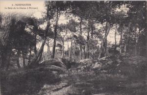 Le Bois de la Chaize a Pe-Lave, NOIRMOUTIER, Vendee, France, 00-10's